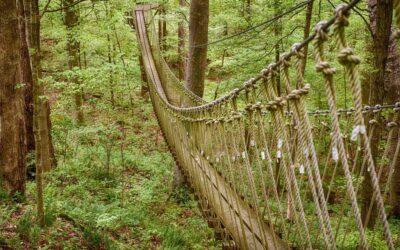Ziplines in Shawnee Forest
